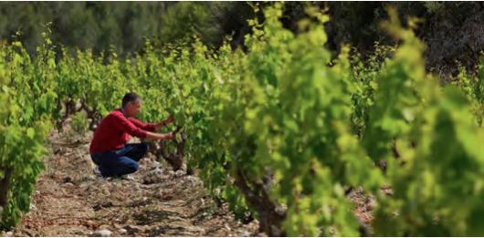 Especial vinos y bodegas singulares II